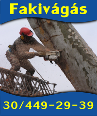 fakivagas1.png